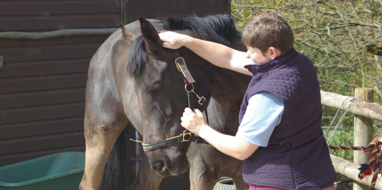 Secretary Changes Horses